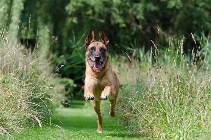 Wireless dog fence - Dog Training