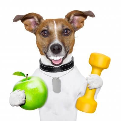 friendly-pet-products health