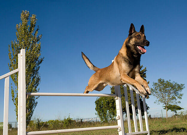 how-to-keep-dogs-out-of-your-yard-dog-exercise