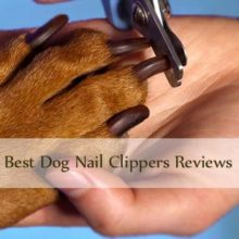 Best Dog Nail clippers Reviews