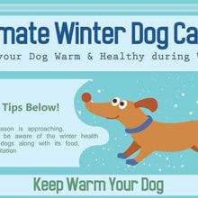 Ultimate Winter Dog Care Thumbnail