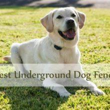 Best Underground dog fence thumbnail