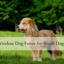 wireless dog fence for small dogs thumbnail