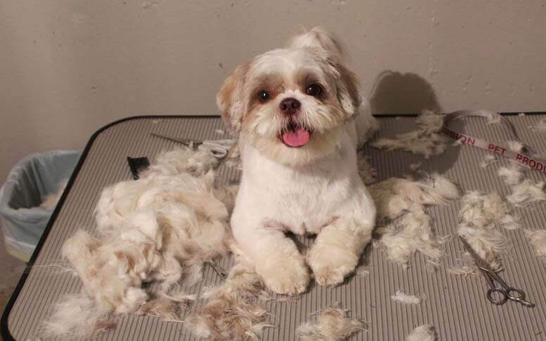 Cut Dog Hair with Scissors