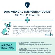Dog Medical Emergency